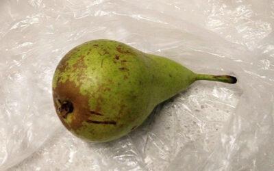 Podivné nápady: Muž kradl hrušku, žena si políčila na jarní cibulku