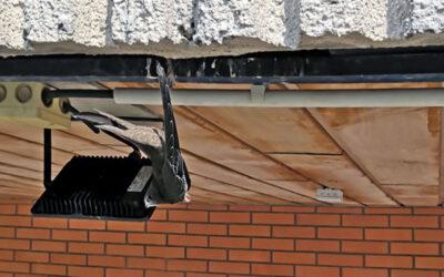 Uvízlá vlaštovka na budově a žena v zaseknutém výtahu. I v takových případech pomáhají strážníci MP Zlín