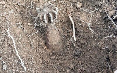V lese na Kocandě byl nalezen minometný granát. Strážníci místo uzavřeli
